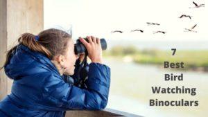 Best Binoculars Of Bird Watching